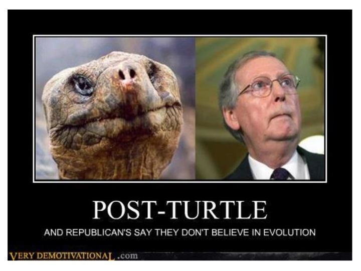 justbecausegopturtle